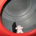 Kapitalistenschaf in der Wäschetrommel